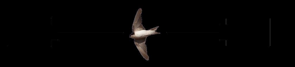 fotografía de alta velocidad